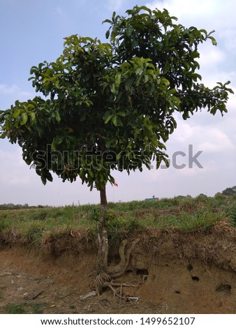 a tree that lives on the edge of a dry river
