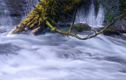 A tree trunk in a stormy river stream. Flowing water. Water stream. Water flow