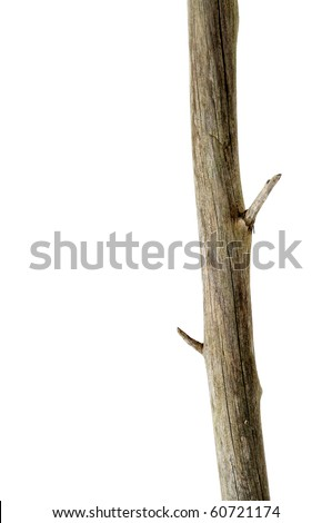 a tree trunk isolated on a white background