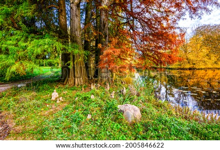 A tree with autumn foliage on the river bank. Autumn forest river shore. Autumn river shore in forest