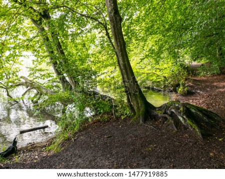 a tree with branches branching into the calm lake water, an unspeakable sky