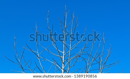 A tree with no leaves. Winter season background image.