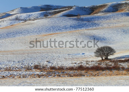 A tree with snowy mountain background in a grassland in Inner Mongolia, China