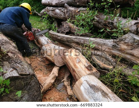 A tree worker cuts a tree log into various equal size pieces using a chainsaw. They are to be used as landscape material.