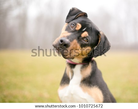 A tricolor mixed breed dog listening intently with a foggy background