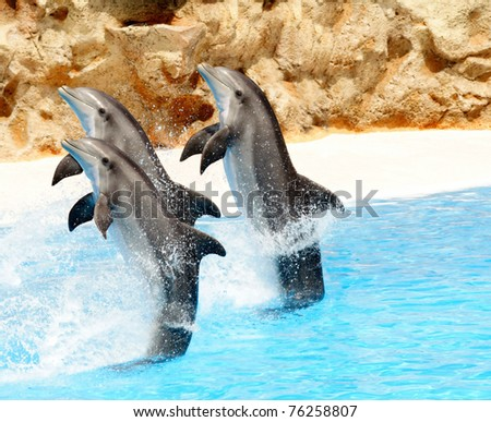 A trio of Bottlenose Dolphis performing tail stands