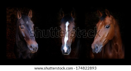 A triptych of three horses head shots against a black background.