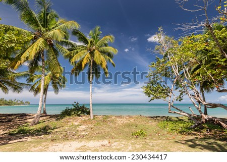 A tropical beach view with palm trees and sea on the background.