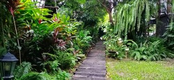 A tropical garden with a lawn, Red ginger, Dracaena Palm(Ti plant), ferns in the ground and hanging on the big trees, walkways using sleepers.