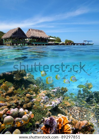 A tropical restaurant over the water and a colorful coral reef with fish and a sea turtle underwater, Caribbean sea