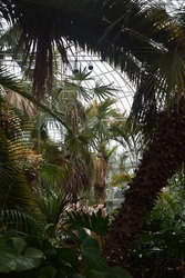 A tropical room in a botanic gardens