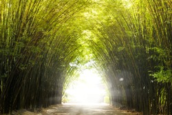 A Tunnel of bamboo forest with green and yellow leaves in tropical rainforest, Thailand