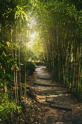 A tunnel of green bamboo branches with soft light at the end. Passage in the park with steps from stone slabs. The sun's rays make their way through the bamboo branches.