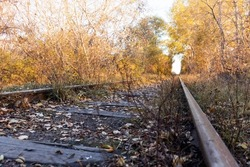 A tunnel of trees over an old abandoned railway line in the alley of autumn trees.