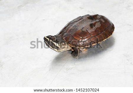 A turtle, a baby turtle get from reiver