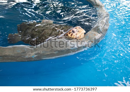 A turtle in its crystal clear water tank. Protected animals. Marine animals. Endangered animals.