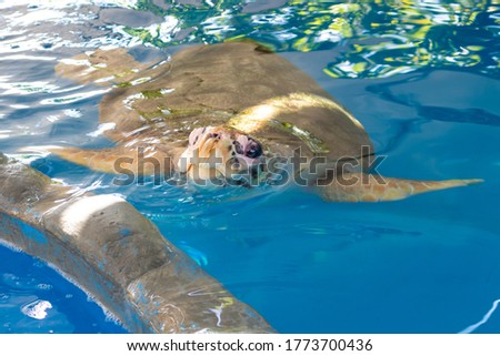 A turtle in its crystal clear water tank. The head of a turtle being lit by a ray of sunshine. Protected animals. Marine animals. Endangered animals.