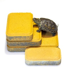A turtle is climbing on a yellow paving slab. Young tortoise.