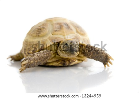 A turtle on white