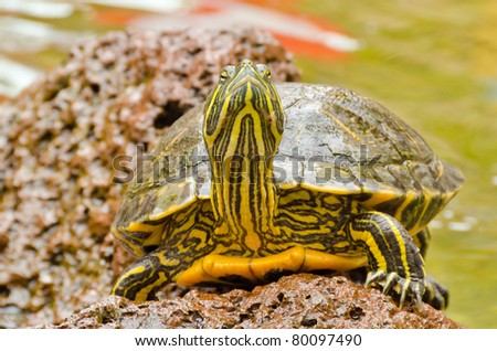 A turtle standing on stone