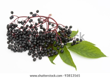 A twig with elderberries and a leaf lying on a white background.