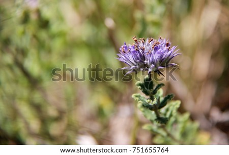 Shutterstock A typical purple flower found in the Brazilian savannah. Flower of the Cerrado. Cerrado brasileiro.