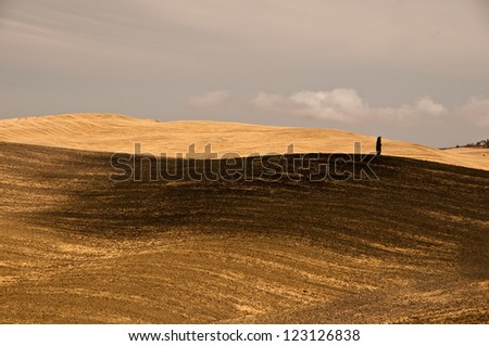 A typical tuscan landscape