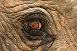 A unique look into the eye of one of the worlds most loved animals,the African elephant. Taken in South Africa.