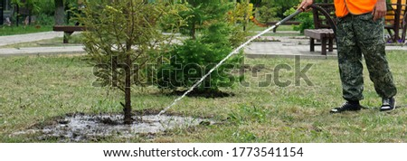 A utility worker or gardener is watering conifers in a garden or park. City improvement. Homestead farming. Horizontal banner