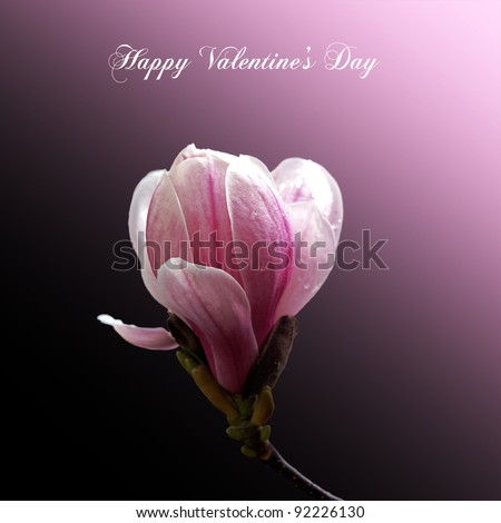 A Valentine Card with a single magnolia bloom isolated on gradient pink and black background. Happy Valentine Day message.