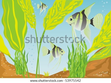 Aquarium fishes in their