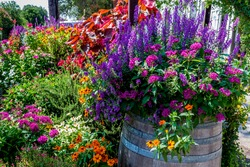 A Variety of Colorful Garden Flowers, including Periwinkles, in Wine Barrels and other Containers.