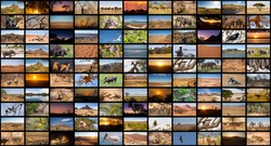 A variety of images of African Landscapes and Animals as a big image wall, documentary channel