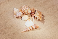 A variety of shells lie on the sand. The concept of summer vacation at sea. Sandy beach.