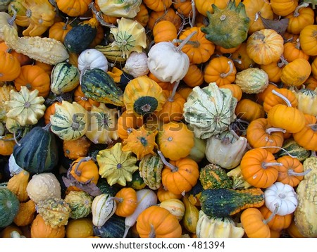 A variety of small gourds and pumpkins in a crate