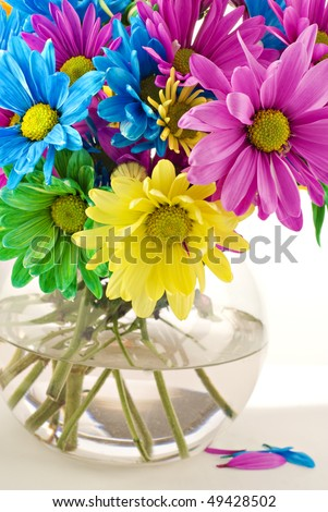 A vase of colorful spring daisies in a glass vase with high key white background, selective focus, vertical with copy space, great for Mother\'s Day or Easter