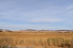 A vast dried field during the daytime