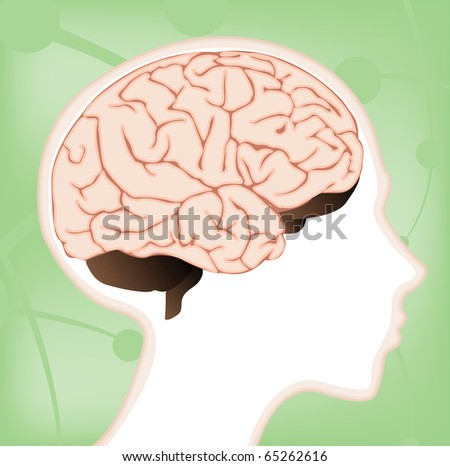 lobes of brain. stock photo : A vector rain