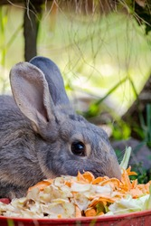 A vertical closeup shot of a cute furry bunny eating carrot peels with a blurred background