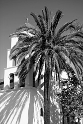 A vertical grayscale shot of a palm in front of a church