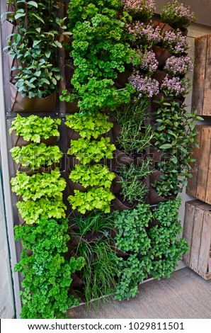 A vertical herb garden in a small urban garden space with range of herb vaieties