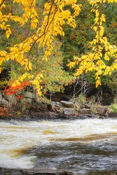 A Vertical of bright leaves and rapids at Algonquin Provincial Park, Canada