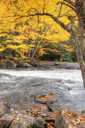 A Vertical of colorful leaves and rapids at Algonquin Provincial Park, Canada