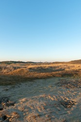 A vertical shot of a coastal dry field in Norderney