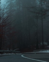 A vertical shot of a dark and creepy road surrounded by tall trees in foggy weather