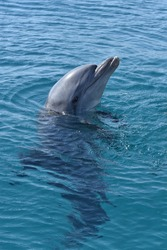 A vertical shot of a dolphin swimming in the blue waters of the marine park