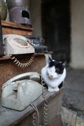 A vertical shot of a domestic black and white cat sitting on a wooden shelf next to antiques