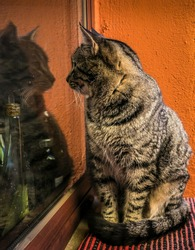 A vertical shot of a fluffy cat sitting by a window while looking at its own reflection