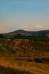 A vertical shot of a hill covered in trees in Dalat