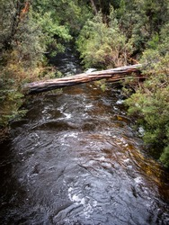 A vertical shot of a log bridge over a small river though a forest